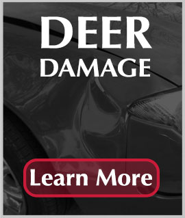 Deer Damage